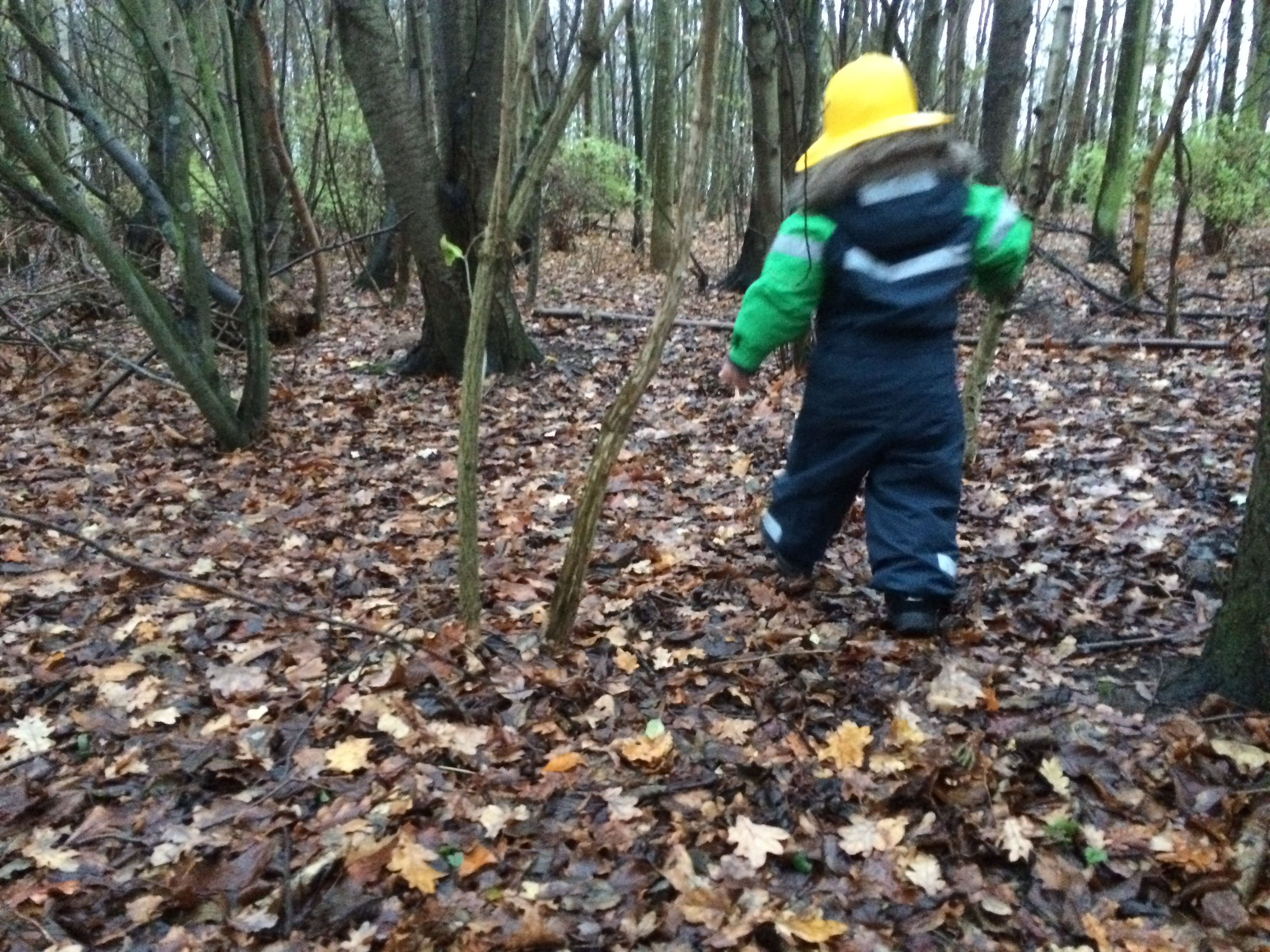Vi upptäcker skogen