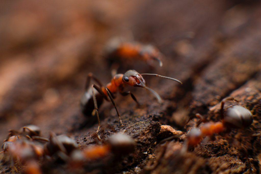 Myran och lövet - vem är det som saknas?