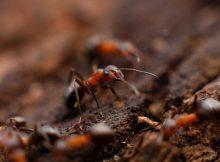 myran och lövet